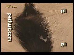 Petlust Riding Blinky (part 4)