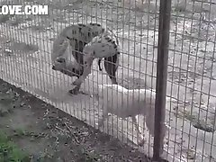 Hyena And Dog Barnlovecom[mp4]