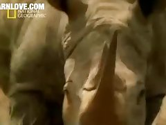 Animal Sex Hyena Barnlovecom[mp4]