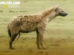 Animal Sex Hyena Barnlovecom[mp4]