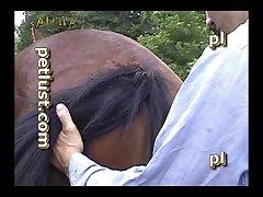 Gay Zoo Petlust Men & Stallion [divx] (part 3)