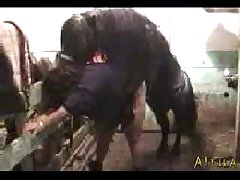 (animal) Sex Horse Mini Horse Fucks Girl Violently (beast) Xvid